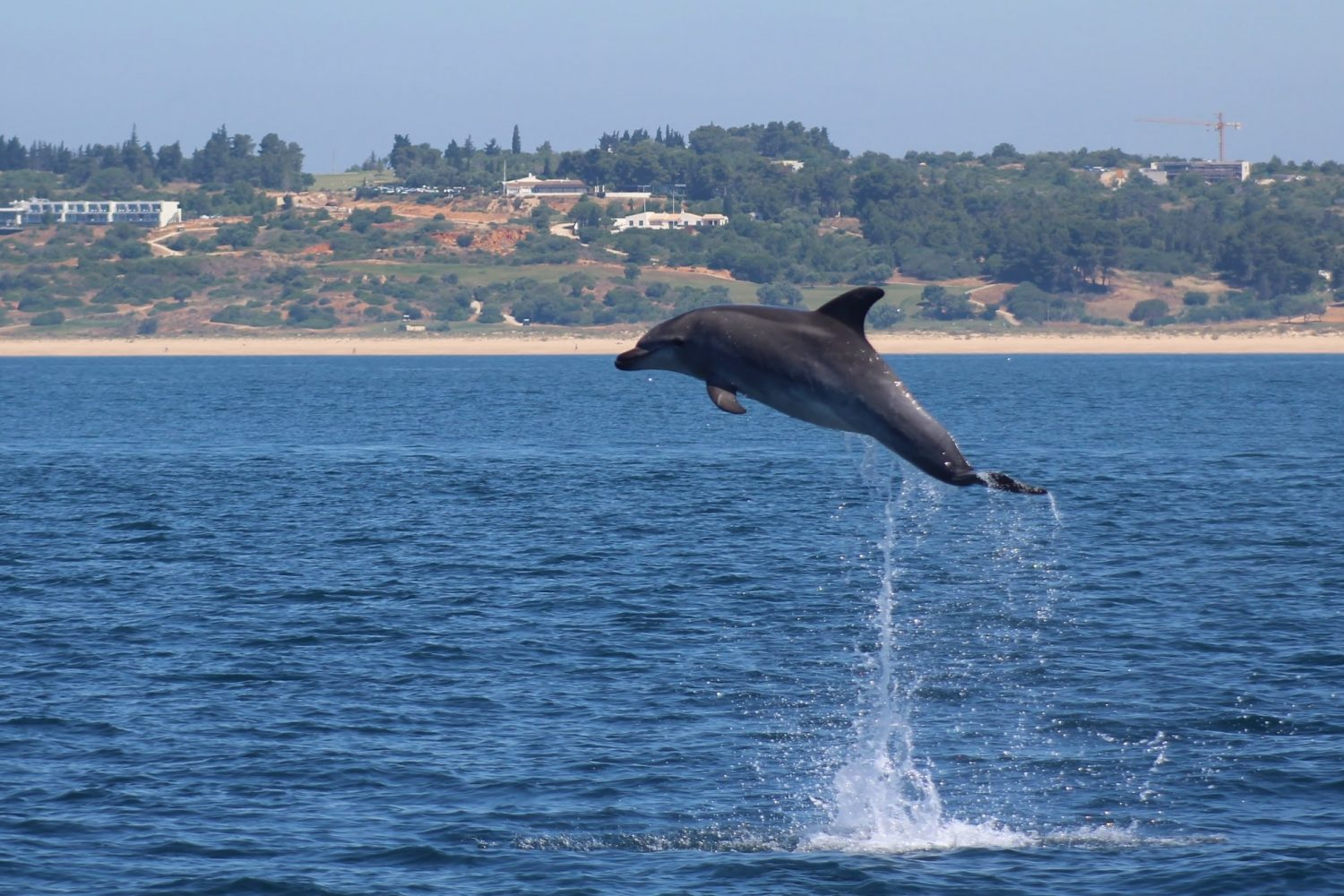 dolphins jumping alone lagos