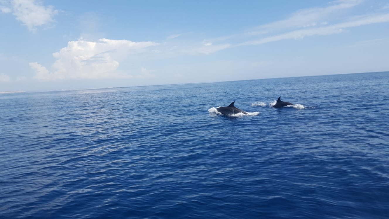 dolphins in the sea lagos
