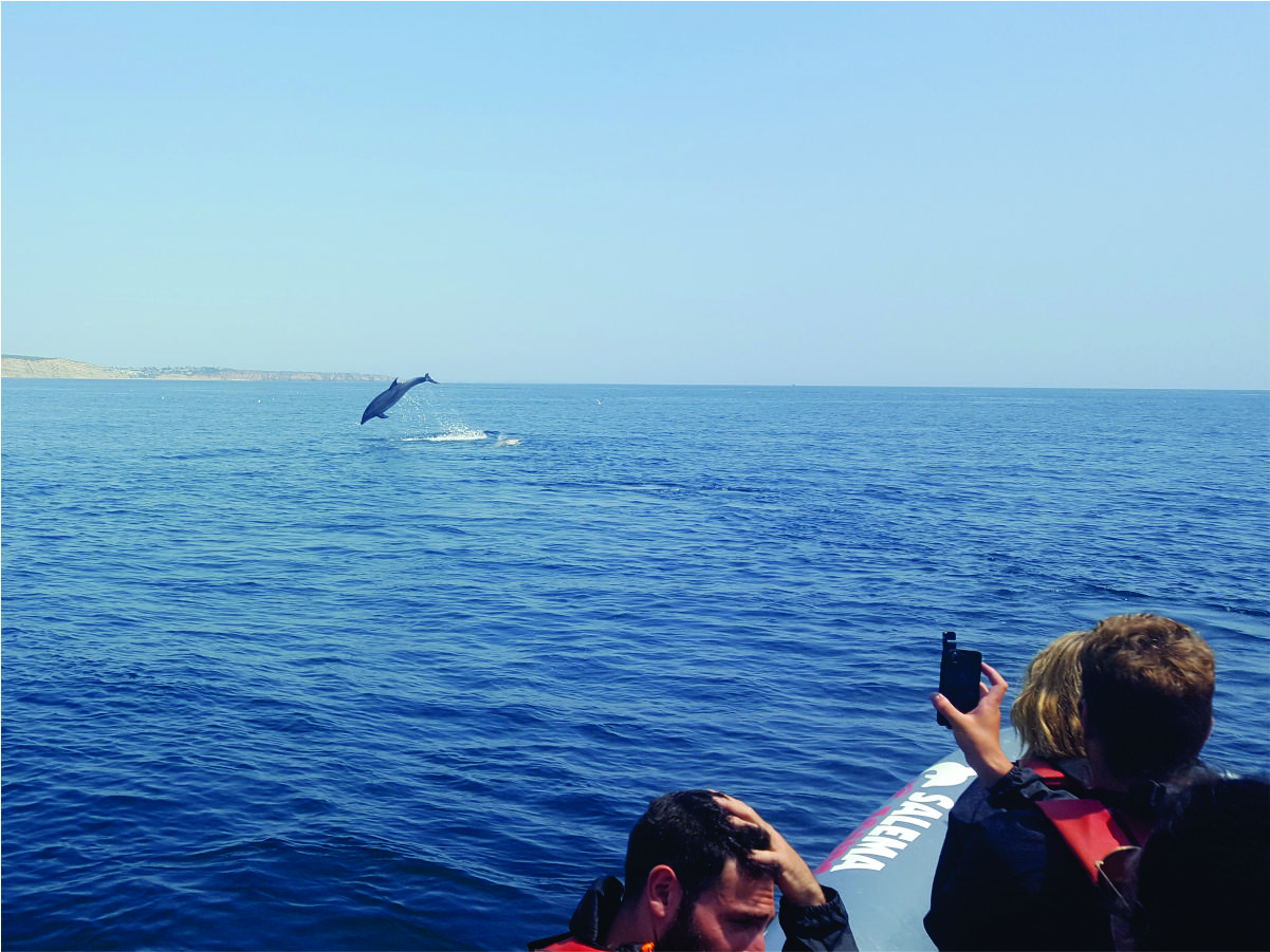 taking photos of the dolphins