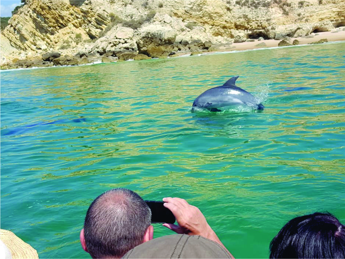 everybody has fun with the dolphins with kayak